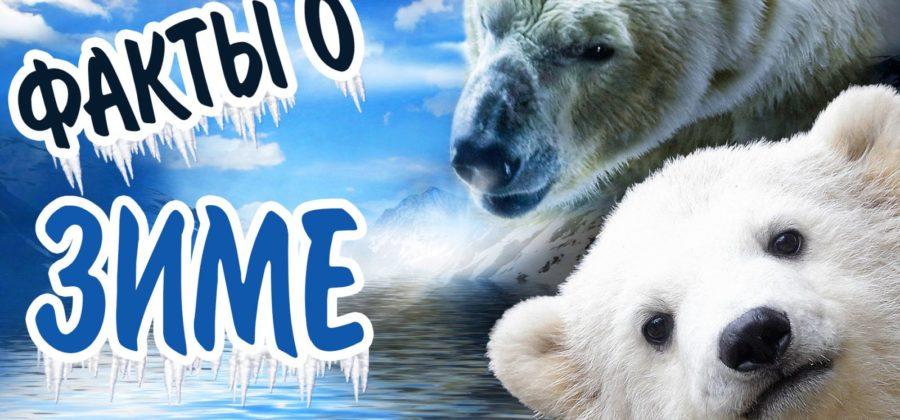 Интересные факты о зиме и снеге