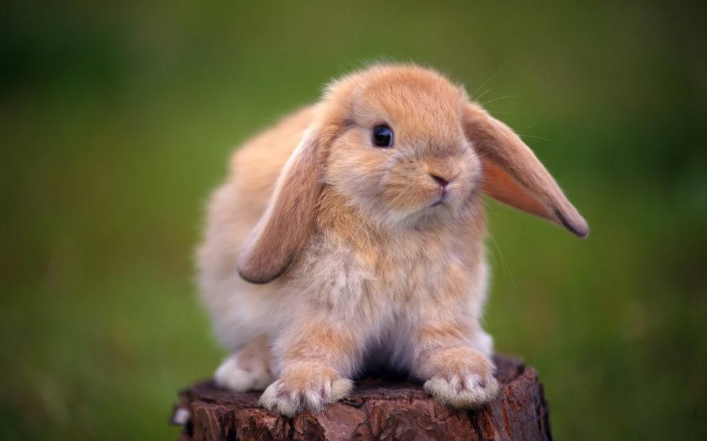 Кролики и клетка