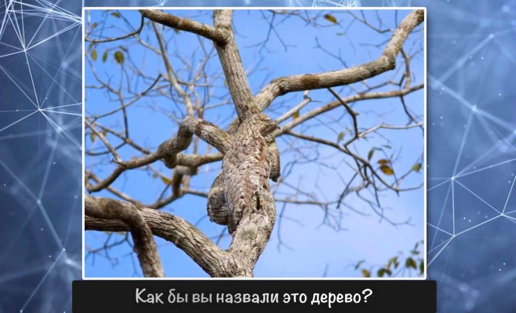 загадка про дерево
