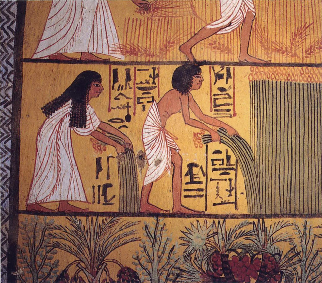 египтяне собирают хлеб