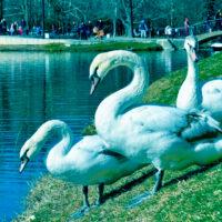 Достопримечательности Симферополя, которые стоит посетить. Крым – Россия