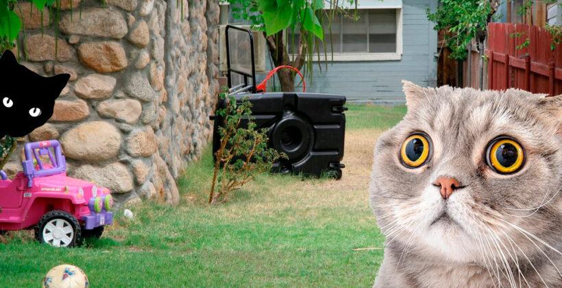 10 загадок-картинок: Найди кота