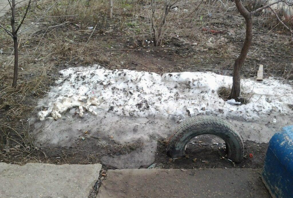 найди кота в снегу