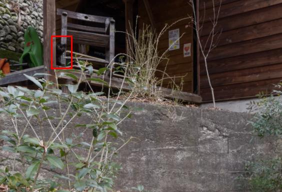 Где спрятался кот на дачном участке ответ