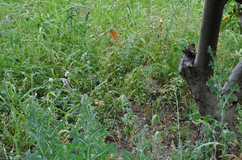 Найди кота в траве