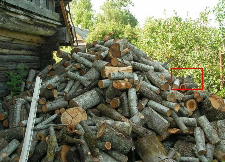кот спрятавшийся в дровах
