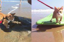 Бездомный котенок решил, что хочет стать серфером